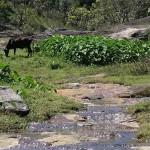Vattenfall i Kerala, Indien