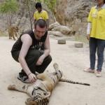 Jag klappar en tiger vid tiger tempelet i Kanchanaburi